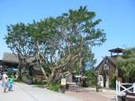 Seaport Village Square