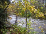 Vermont brook