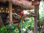 A beautiful tucan in the front lobby