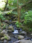 Our hike to Punchbowl Falls on Eagle Creek