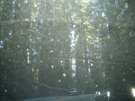 Taken through the buggy windshield - such thick trees!