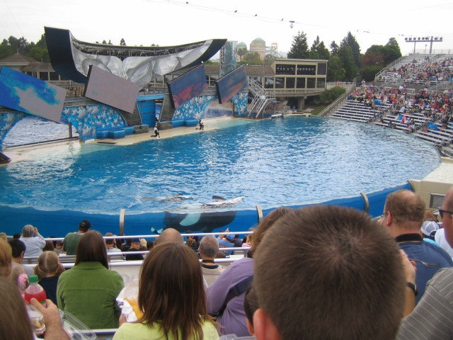 Believe - the new Shamu show Four moving screens, a beautiful score and six powerful killer whales create a fantastic show