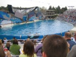 Believe - the new Shamu show