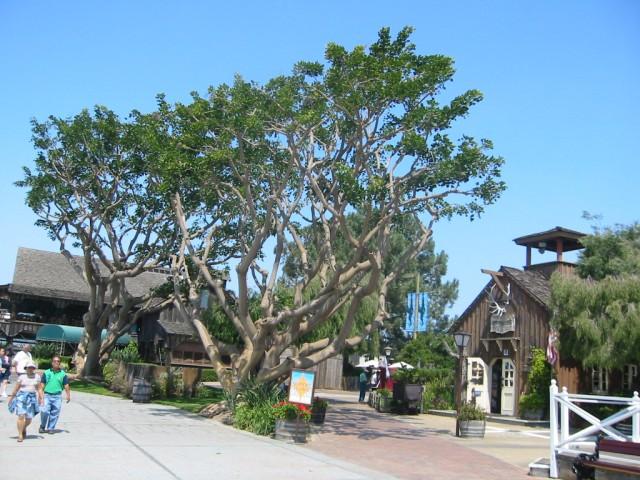 Seaport Village Square