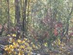 Woods all around