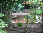 Flamingos in a pond in the jungle