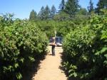 Glenda picking berries