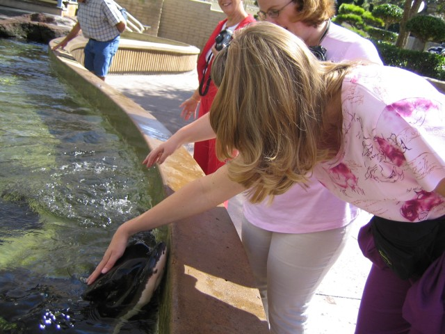 Carrie petting a stingray