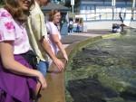 Stingray exhibit