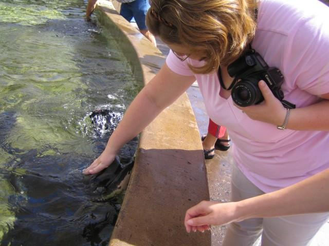 Heather petting a stingray