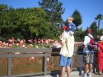 Nathan on Brian's shoulders at the flamingo exhibit