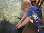 Nathan petting a stingray