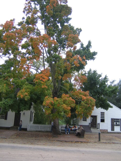 The trees are changing at Williamsburg